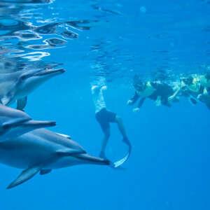 Dolphin Snorkeling in West Oahu