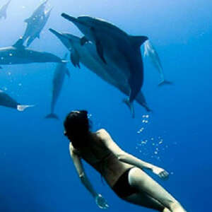 Kona Swimming with Wild Dolphins