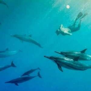 Swim with Dolphins in Kona