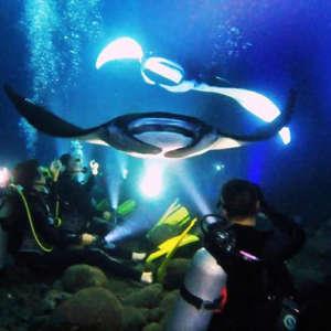 Kona Night Scuba Dive with Manta Rays
