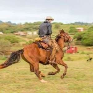 Private Advanced Horseback Ride