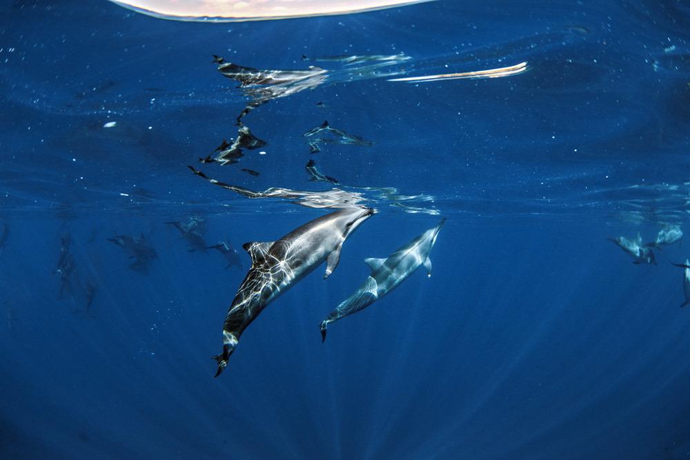 laserwolf-dolphin-in-hawaii.jpg#asset:2836