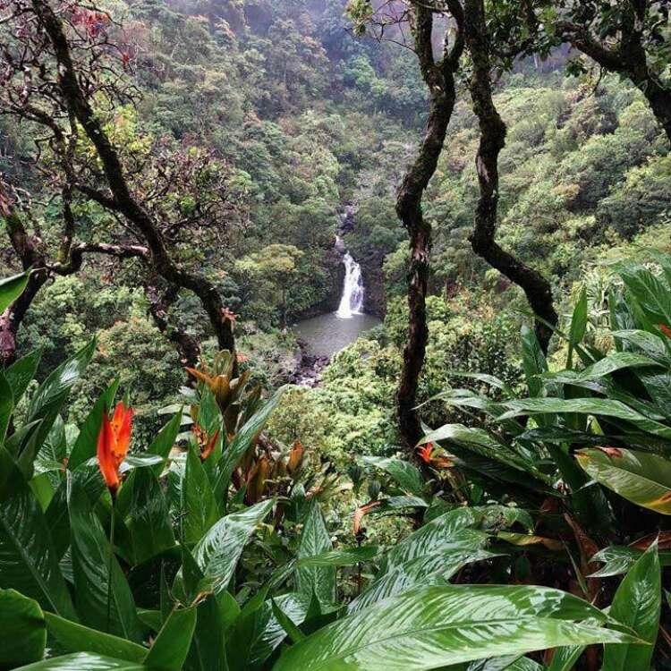 Maui hawaii now background