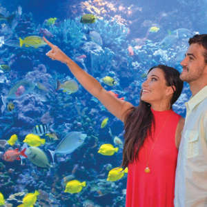 Maui Aquarium Admission Packages