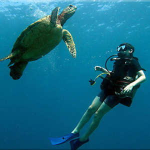 Learn to Scuba Dive in Wailea