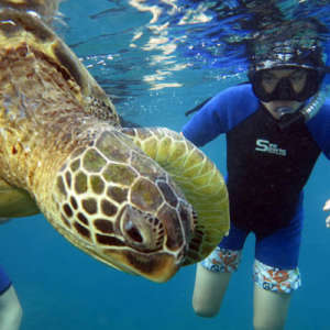 Wailea Eco Snorkel Lesson and Tour