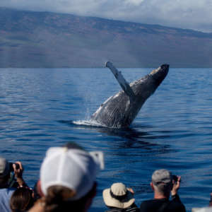 Whale Watching from Ma'alaea Harbor
