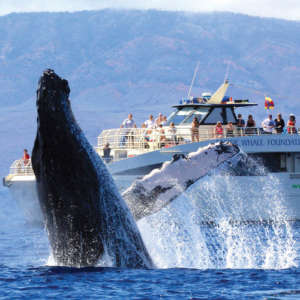 Whale Watching in Lahaina